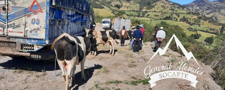 FERIA DE GANADO DE LA PARROQUIA